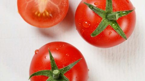토마토 가격 한 달 새 82% '껑충'