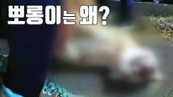 [자막뉴스] 동물원 탈출 퓨마 '뽀롱이'는 왜 죽어야 했나