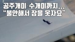 """[자막뉴스] 공주개미·수개미까지...""""불안해서 잠을 못자요"""""""