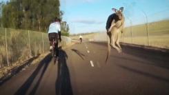 [지구촌생생영상] 호주에서는 일상...갑자기 자전거 덮친 캥거루