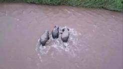 [지구촌생생영상] '가족의 힘'...새끼 코끼리 구출작전