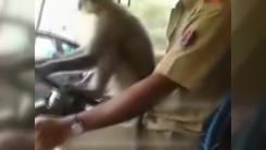 [지구촌생생영상] 30명 탄 버스 운전 원숭이...버스 기사 '정직 처분'