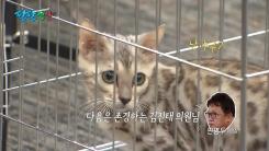 """[팔팔영상] 김진태 """"불쌍하지 않습니까, 저 퓨마!"""""""