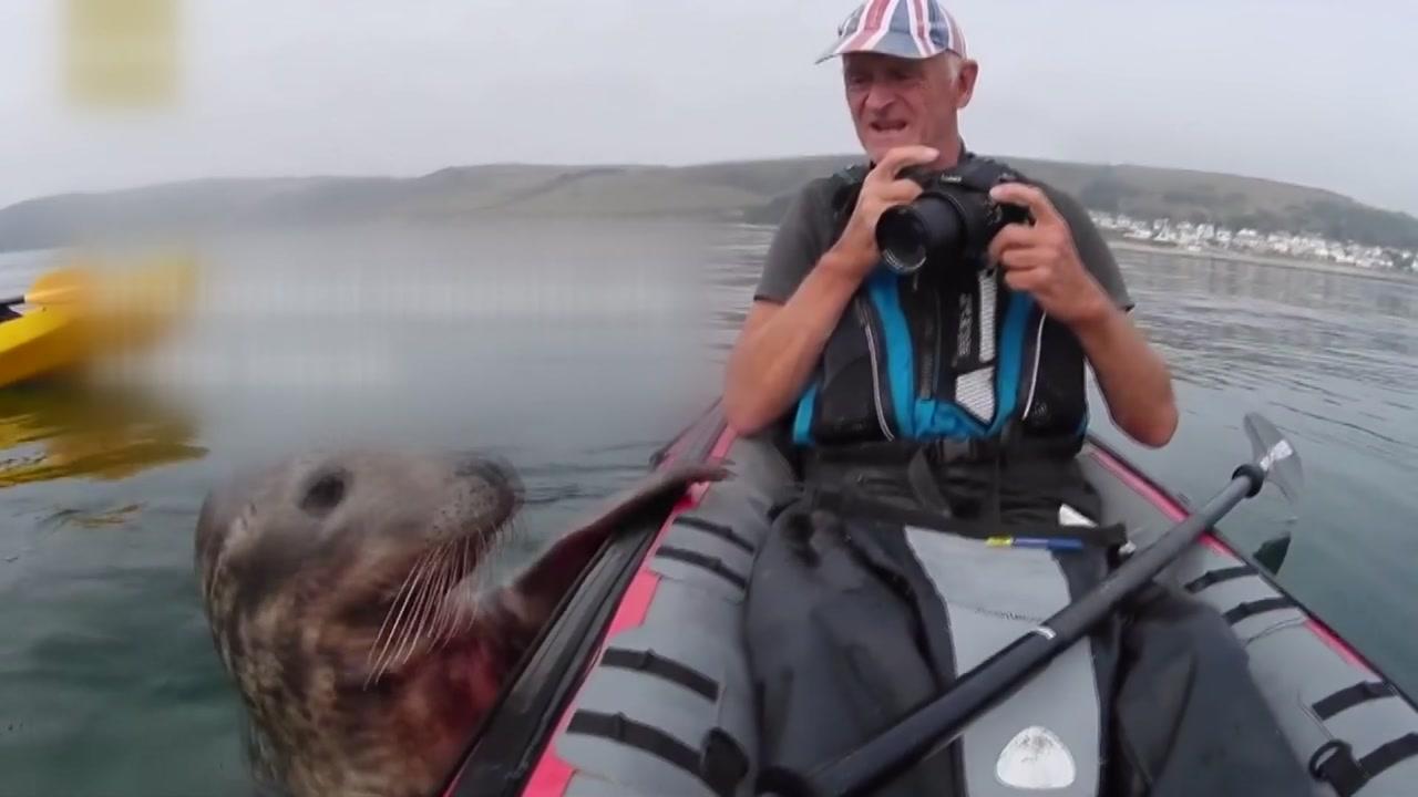 [지구촌생생영상] '저 좀 태워주세요'...호기심 많은 바다표범