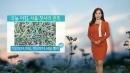 [날씨] 오늘 아침, 서울 첫 서리...연이틀 올가을...