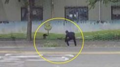 [좋은뉴스] 도로에 떨어진 나뭇가지 치워 준 시민