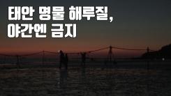 [자막뉴스] 태안 명물 '불빛 사냥' 해루질, 야간엔 금지