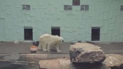 북극에 가지 못한 북극곰 통키…동물원에 갇혀 지내던 생전 모습