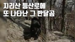 """[자막뉴스] """"사람 피하는 법 못 배워..."""" 또 나타난 그 반달곰"""