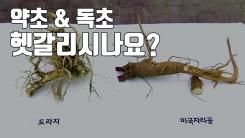 [자막뉴스] 가을철 약초, 잘못 먹으면 독초...구별법은?