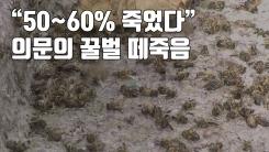 """[자막뉴스] """"50~60% 죽었다"""" 의문의 꿀벌 떼죽음"""