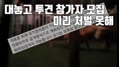 [자막뉴스] 대놓고 '투견 도박 모집'...미리 처벌 못한다?