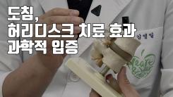 [자막뉴스] 도침, '허리디스크 치료 효과' 과학적 입증