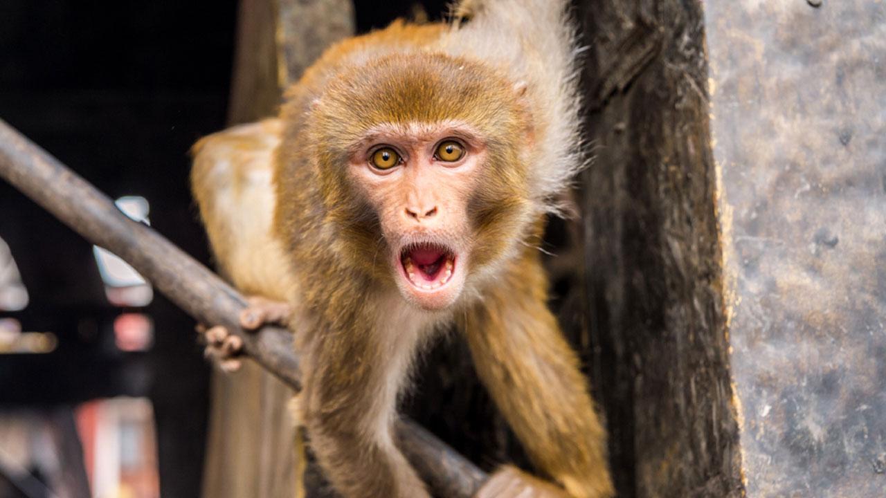 원숭이가 12일 된 갓난 아기 납치해 살해