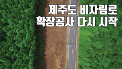 """[자막뉴스] 제주 비자림로 공사 재개...""""삼나무 훼손 최소화"""""""