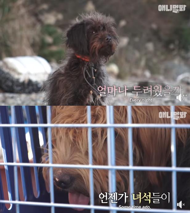 """통영 무인도에 유기된 견공 두 마리…제보자 """"주인 정말 나빠"""""""