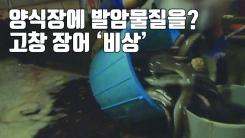 """[자막뉴스] """"항생제인 줄 알고..."""" 고창 장어 양식장에 부어버린 '발암성 물질'"""