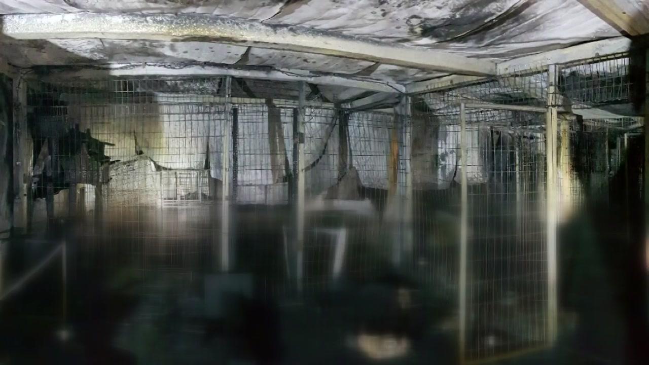 '이효리 유기견' 입양했던 보호소 불...유기견 등 260여 마리 죽어
