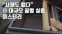 """[자막뉴스] """"사체도 없다"""" 日 대규모 꿀벌 실종 미스터리"""