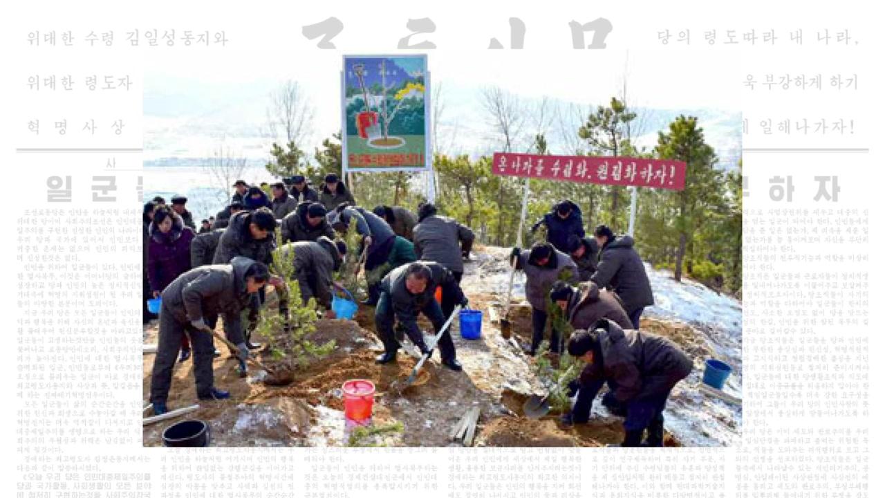 산림복구 총력 北, '성과 미달' 공개 질타