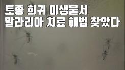 [자막뉴스] 토종 희귀 미생물서 '말라리아' 치료 해법 찾았다