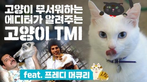 이거까지 알아야 되나 싶은 정보까지! '고양이 TMI'