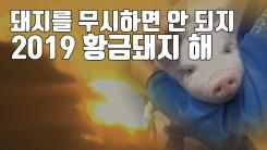 """[자막뉴스] """"돼지 무시하면 안 되지""""...2019 황금돼지의 해"""
