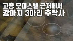 [자막뉴스] 고층 오피스텔서 강아지 3마리 추락사...20대 여성 체포