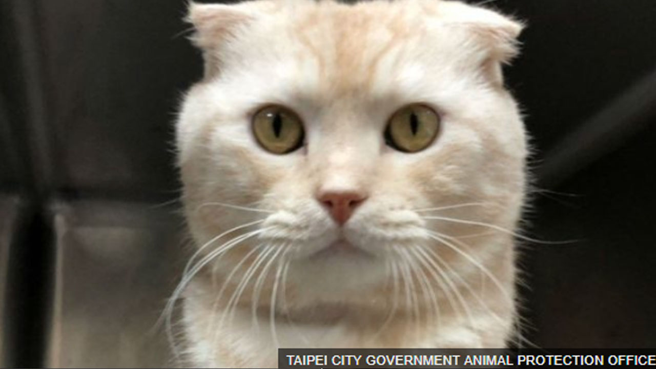 '살아있는 고양이' 택배로 보낸 남성에게 비난 쏟아져