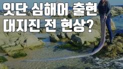 [자막뉴스] 동해안에 잇단 심해어 출현...대지진의 전조 현상?