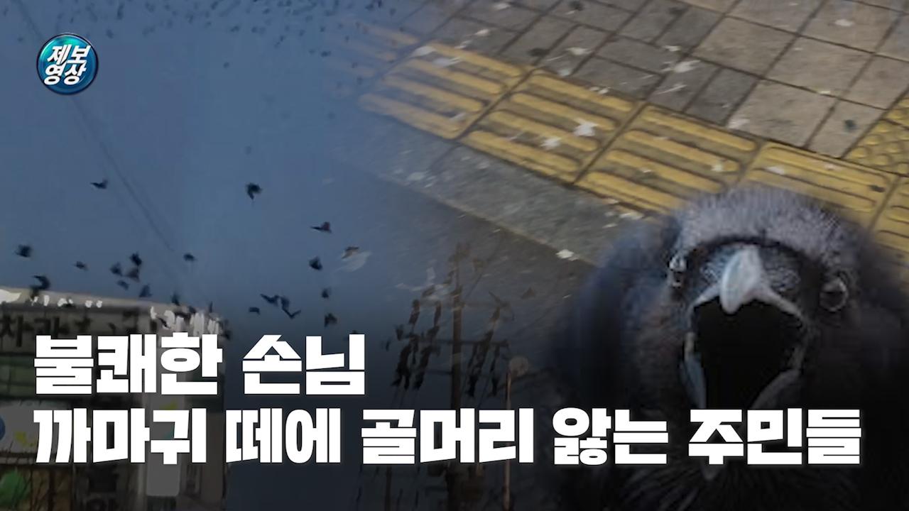 [제보영상] 불쾌한 손님, 까마귀 떼에 골머리 앓는 주민들