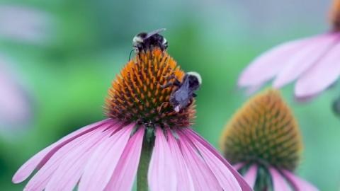 [영상] 벌에 달린 '작은 배낭'…어떤 이유가?
