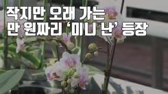 [자막뉴스] 작지만 오래 가는 만 원짜리 '미니 난' 등장
