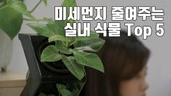 [자막뉴스] 미세먼지 줄여주는 실내 식물 Top 5