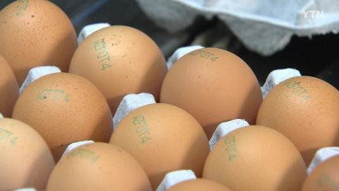 모레부터 달걀 산란일자 표시…날짜 확인하고 구입하세요