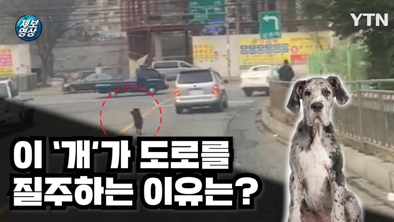 [제보영상] 도로를 질주하는 검정색 개...무슨 사연이?