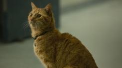 CG 혹은 실제?...'캡틴 마블' 고양이 구스, 탄생의 비밀