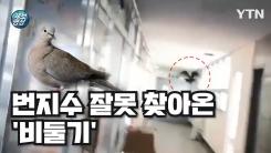 """[제보영상] 번지수 잘못 찾은 비둘기···""""훠이훠이 날아가라!"""""""