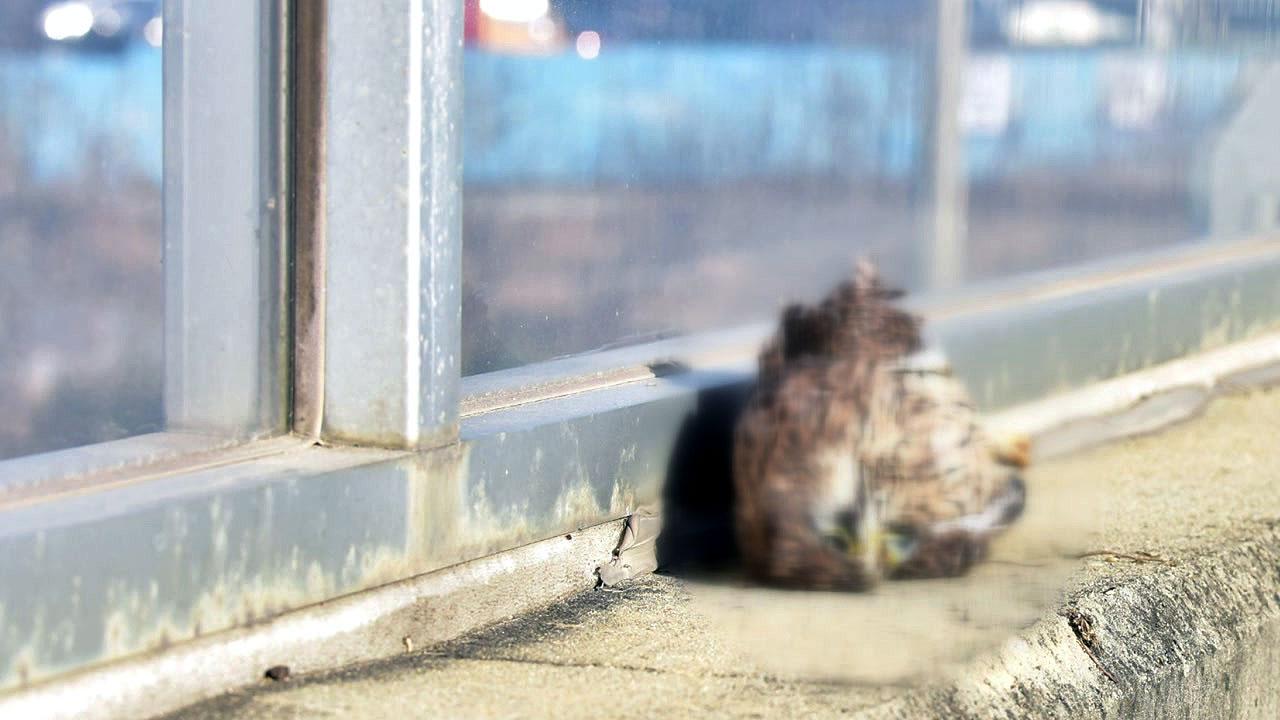 새들의 무덤 투명 방음벽...한해 8백만 마리 폐사