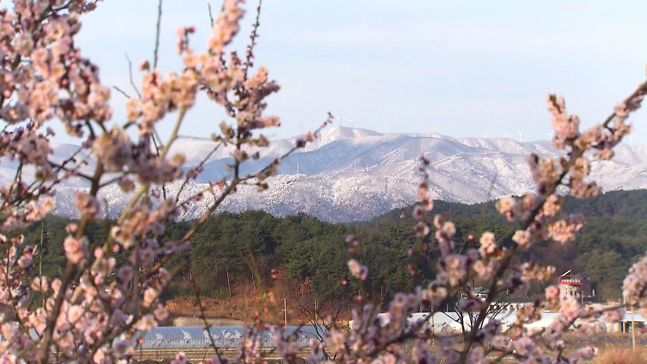 [영상] 3월에 핀 눈꽃...봄과 겨울의 '공존'