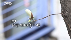 [人터view] 부러진 가지에 '꽃이 피듯'...엄마와 꿀잠의 바람