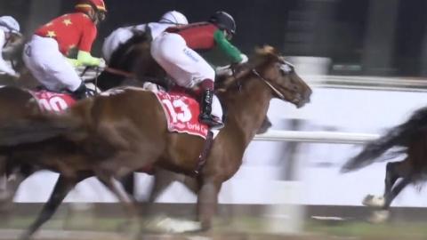 '돌콩', 기적의 성과 이룬 두바이월드컵 11위 마감