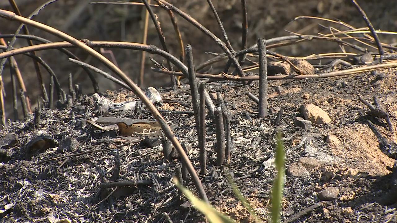 밭에서 시작된 불...20만㎡ 산림 잿더미