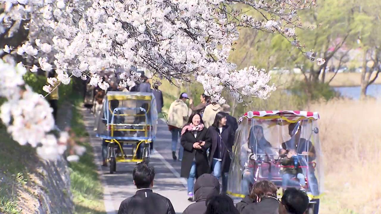 [영상] 바다·호수·벚꽃...경포호의 봄으로 초대