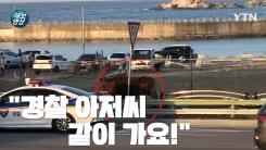 [제보영상] 경찰차를 따라가는 소... 최악의 산불에 동물도 대피