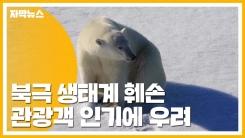 [자막뉴스] 북극 여행 인기...생태계 훼손 우려