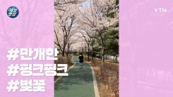 [제보영상] 아직도 벚꽃 구경 못 간 사람 드루와 드루와~!!