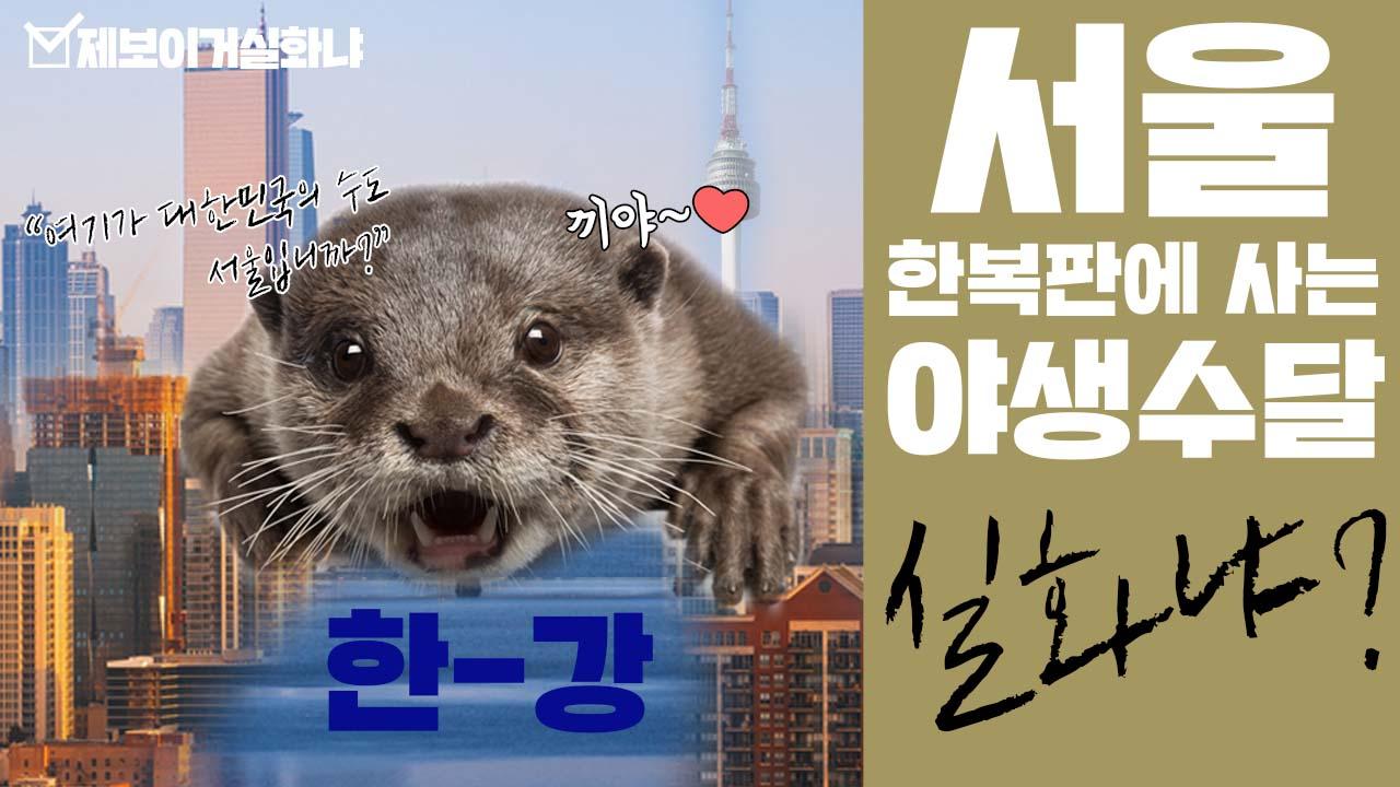 [제보이거실화냐] 서울 한복판에 사는 야생 수달 실화냐?