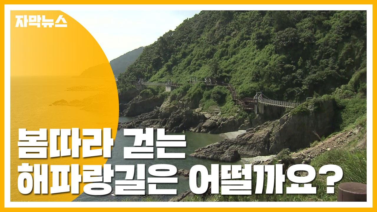 [자막뉴스] 봄따라 걷는 해파랑길은 어떨까요?