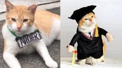 '캠퍼스 6년 살다 떠난 날'…졸업장 받은 길고양이